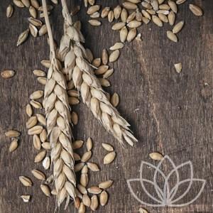 Wholegrains & Rice